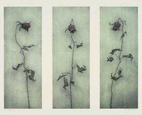 Rose_x_3_1