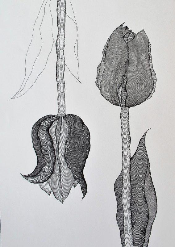 Tulip I - 2