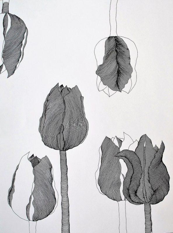Tulip I - 4