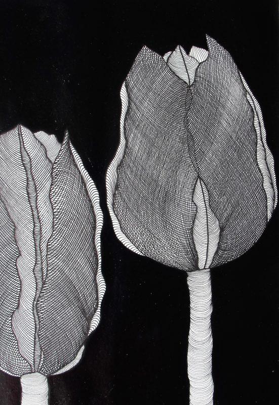 Tulip I - 6